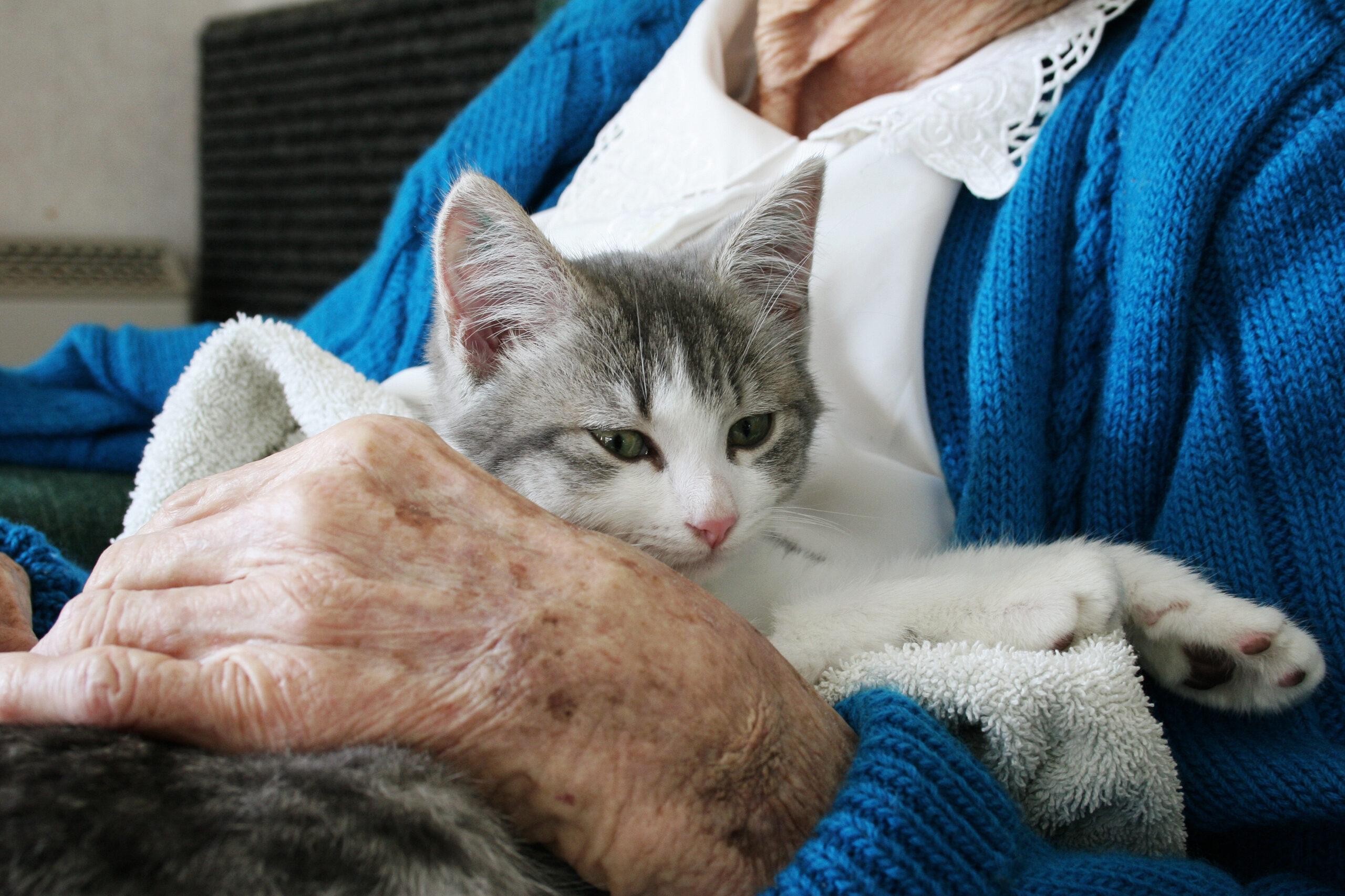 Best Pets for Senior Citizens