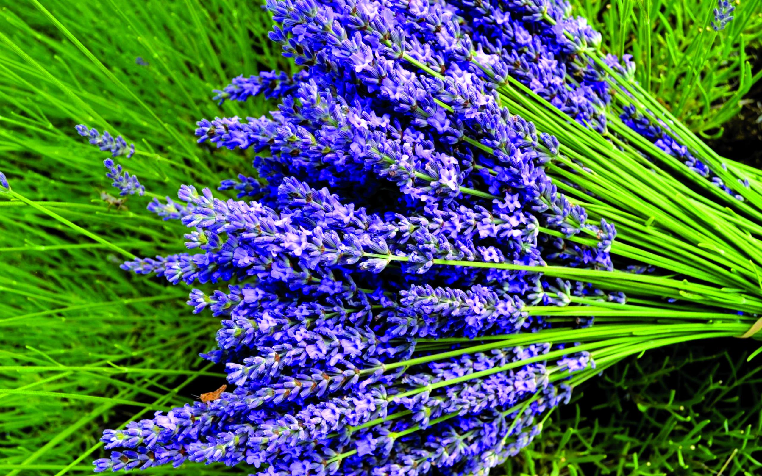 lavender_flowers_bouquets_greens_close-up_42929_3840x2400